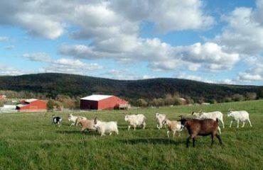 How Farm Sanctuaries Are Changing People's Views